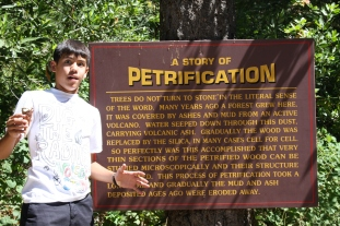 Petrified Forest, Calistoga, California